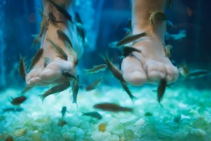8439079-fish-spa-pedicure-wellness-skin-care-treatment
